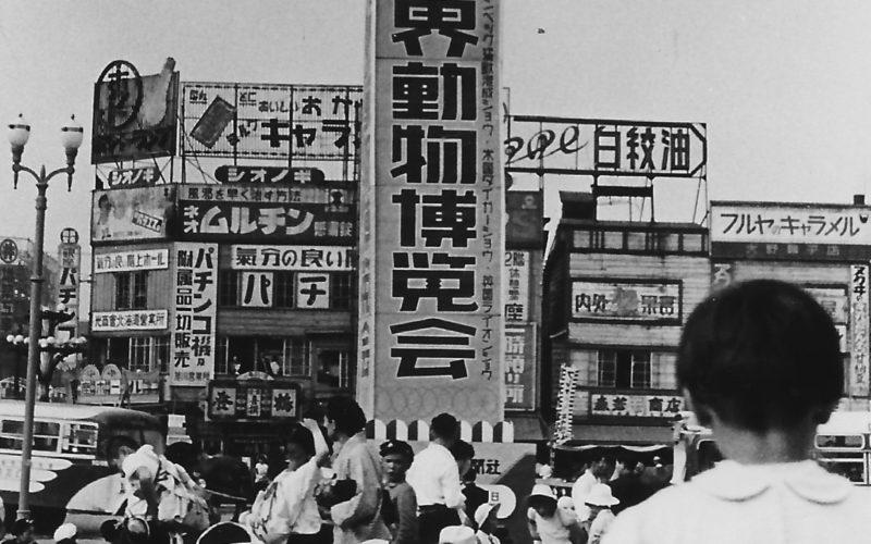 昭和29年 世界動物博覧会