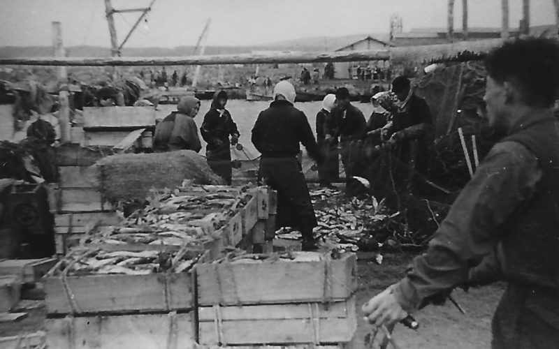 昭和29年 羽幌港 鰊場風景